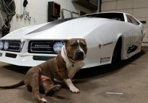 sticker dude-vehicle wraps-car wraps-graphics-vinyl wraps-street outlaws